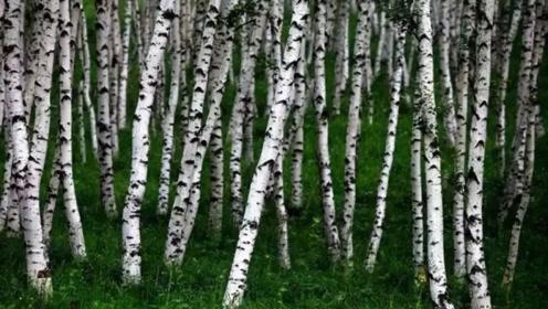 世界上比钢铁还坚硬的树,用斧头劈砍会产生火星,网友:怎么砍断的