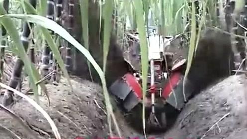 给甘蔗培土,这中耕机操作起来,太给力了