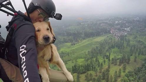 男子脑洞大开,带狗狗跳伞,着陆后狗狗的反应让人哭笑不得!