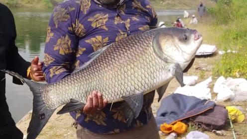 感觉自己的鱼竿可以扔了,人家拿个竹竿钓的鱼,都那么大