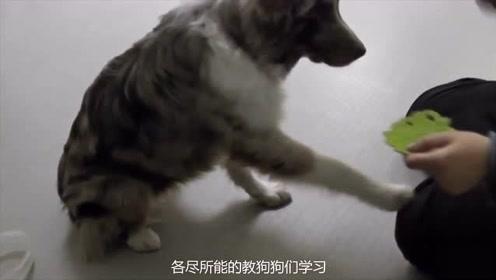 跟铲屎官学习跳舞的狗子,瞬间感觉狗子的气质,都优雅高贵了呢