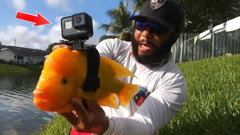 老外脑洞大开,将摄像机绑在鱼儿身上,看看鱼儿在水下看到了什么