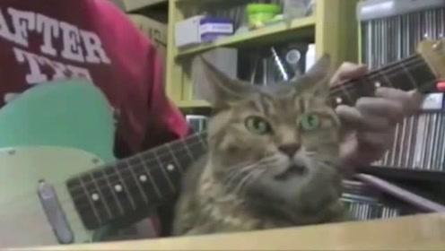主人弹贝斯停下那刻,旁边猫咪的眼神真是绝了