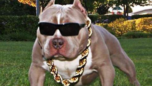 最有钱的狗子,坐拥上亿资产,真是活的不如狗