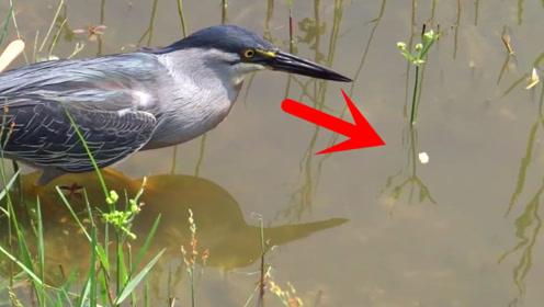 这只水鸟才是钓鱼高手,扔点面包在水里,下一秒就抓到了鱼!