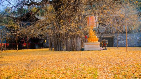 当年李世民亲自种下一棵树,时隔1400年后,今美的一塌糊涂