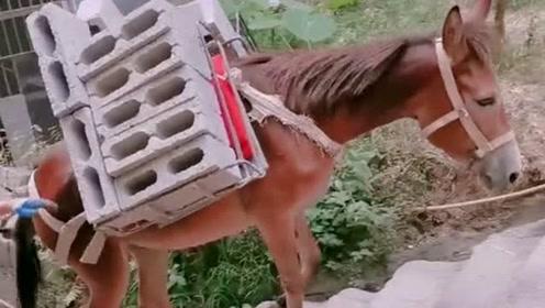 公园里遇见的马儿,累的已经走不动了,愿你下辈子不再做牛做马!