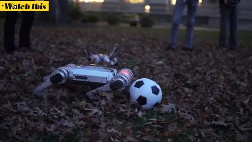 麻省理工四足机器人组队踢足球 有的带球有的划水现场萌翻了!