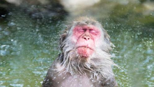 猴子吃一口辣椒会是什么反应,老外亲自尝试,看完请忍住别笑!