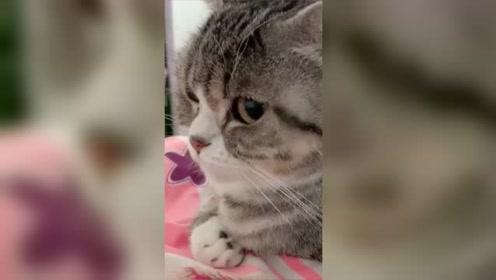 原来女生生气也不分物种?家里萌猫实力证明,生气时的动作!