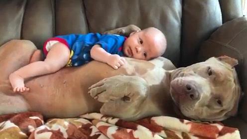 狗狗正在睡觉,宝宝一下子爬到了它身上,狗狗的表情太可爱了