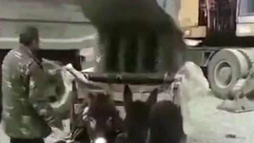 驴兄弟依旧准备装货,怎么回事我怎么飞起来了,谁来拉我一把!