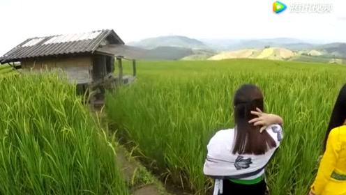 九哥去台湾农村玩耍时,遇见几位高山族的女孩,带着我踏青