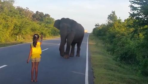 大象误走到了公路上,小女孩好心制止,接下来发生的一幕太暖心了