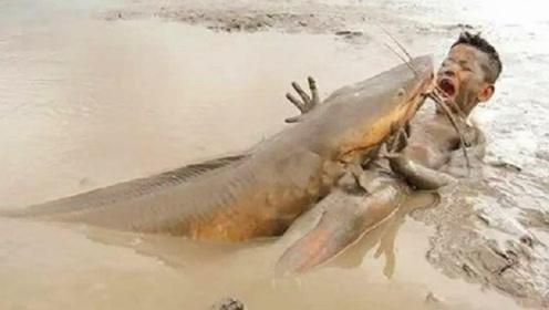 男孩在泥地里捞鱼,一条大鱼突然窜了出来,镜头记录全过程