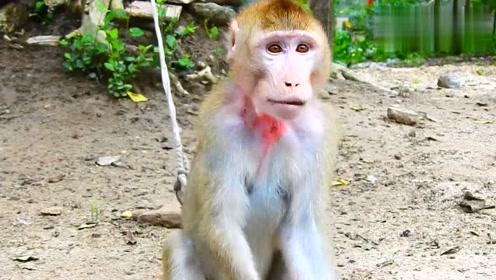 一只受伤了的小猴子,太瘦了