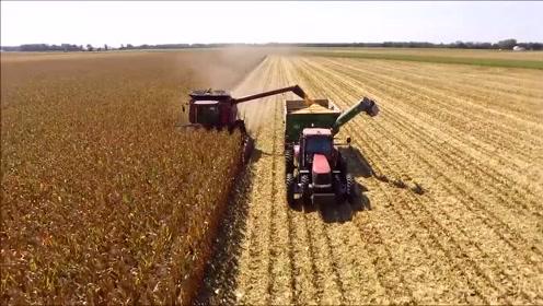 看德国农场是如何收获玉米的,直接收获玉米粒效果更好