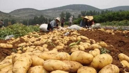 """世界上最""""失败""""的沙漠:本应该黄沙遍地,却被当地用来种马铃薯"""