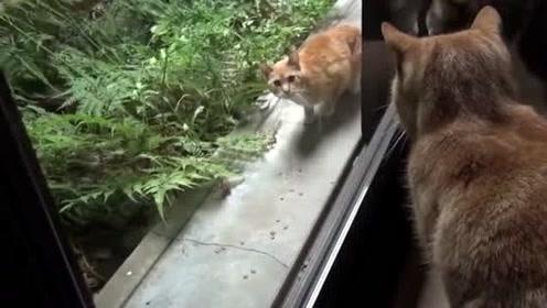 流浪猫:你们家里还缺猫吗,我想加入你们,你们的生活太让我羡慕了