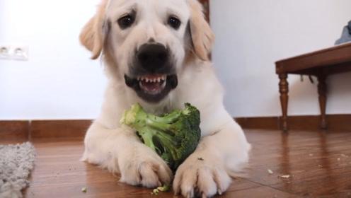 主人发现放在冰箱的蔬菜不见了,进客厅一看,瞬间笑翻了