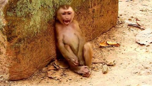 一只奇怪的猴子蹲在石头边,不停的哭泣着,镜头记录全过程!
