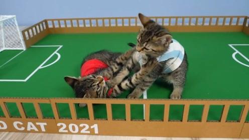 给两只小猫做一个足球场,怎么还打起来了,真是太逗了!