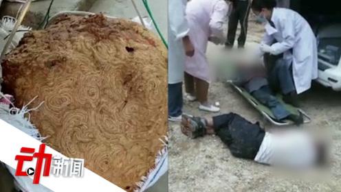 广西8村民回家路上被黄蜂蜇刺 3死5伤若遇该如何自救?