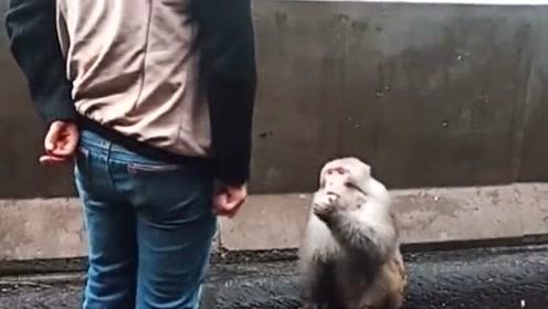 动物成精了!猴子:总有刁民想害朕!