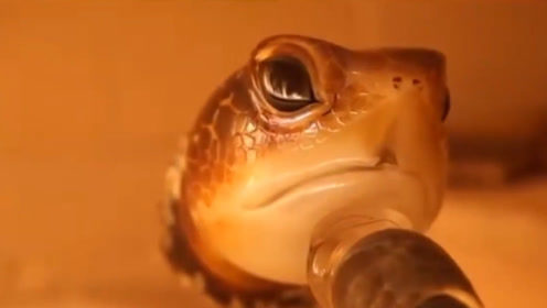 牛人用玻璃制作海龟,成品和真的一样,有人出高价购买被拒绝!