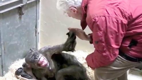 猩猩临终前和主人告别,下一秒猩猩的反应,让众人忍不住哭了