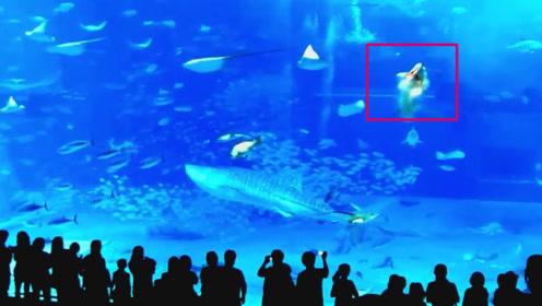 水族馆中,一条剑鱼忽然冲向玻璃撞死自己,原因令人深思!