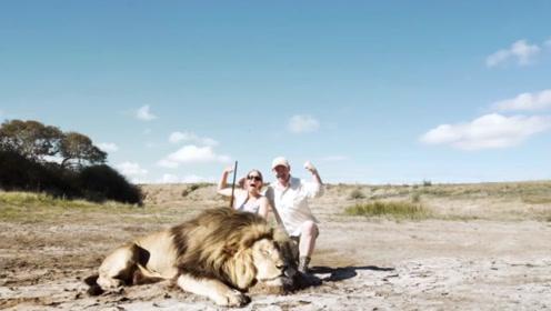外国夫妻捕猎了一头雄狮,雄狮伙伴为其报仇,镜头记录下全过程