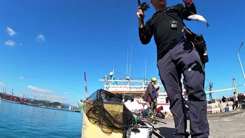 渔港前打钓鱼,黑鲷鱼也太多了吧