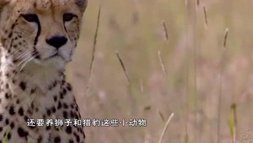 猎豹的舌头有多恐怖?作死老外拿身体做实验,被舔的胳膊成了这样!