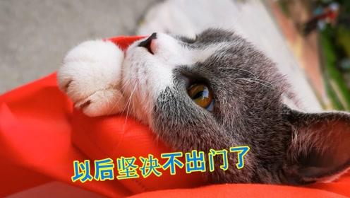 猫偷偷躲进购物车想跟主人一起出门买菜,全程生无可恋,好可怜