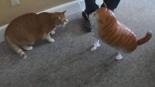 """主人给橘猫买个""""充气猫"""",结果猫咪一巴掌把它拍漏气,太搞笑了"""