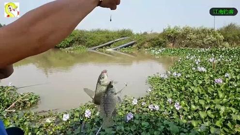 农村这样的小河边野货就是多,钓钩撒下有时还一次上俩条