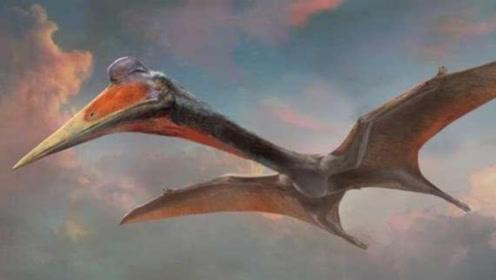 迄今为止最大的飞行动物,体重500斤,翅展宽度达10米