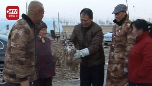 猫头鹰闯进鸽子窝狂吃信鸽 鸽子主人:国家保护动物咱得救