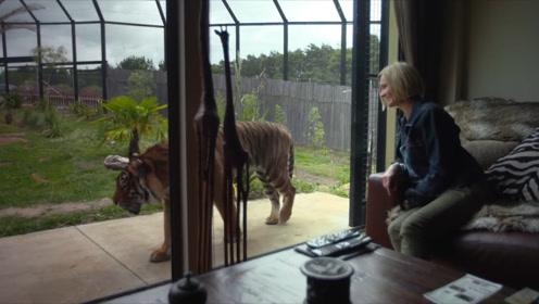 全球首座建在动物园中的酒店,洗澡时棕熊陪伴,和狮子零距离约会
