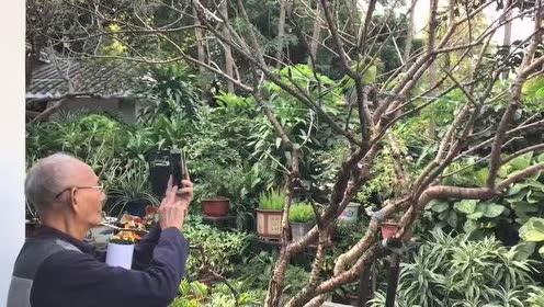 在越秀公园里看老虎,珍稀动物标本户外展出