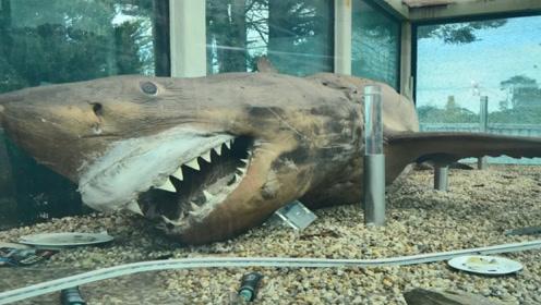 男子进入废弃动物园,发现地下室,进去后竟发现长达5米的大白鲨