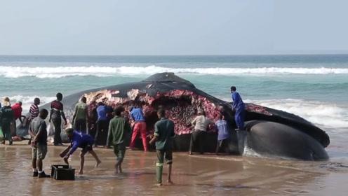 12米长蓝鲸搁浅,非洲人拿刀抢肉,场面太壮观了