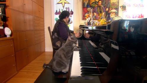 流浪猫跟着音乐家学会了弹钢琴 还成为了网红猫