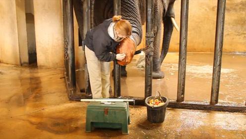 舒坦!大象主动抬脚丫,享受师傅的专业美甲