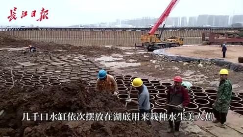 工人在湖底摆放几千个水缸,真相是……