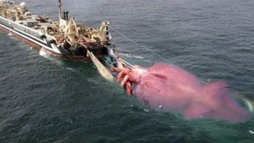 """传说中的""""深海巨兽"""",寿命只能活400天,除了人类没有天敌!"""