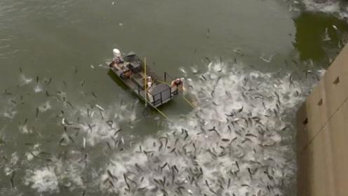 男子水库捕鱼,只听见大喊一声,水面变得非常壮观!
