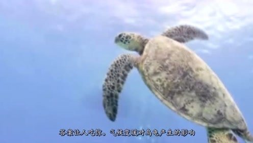 气候变暖会影响乌龟性别?科学家研究证实!不可思议