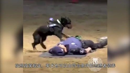 为什么说警犬的伙食是最好的?看看它们平时的训练就知道了!